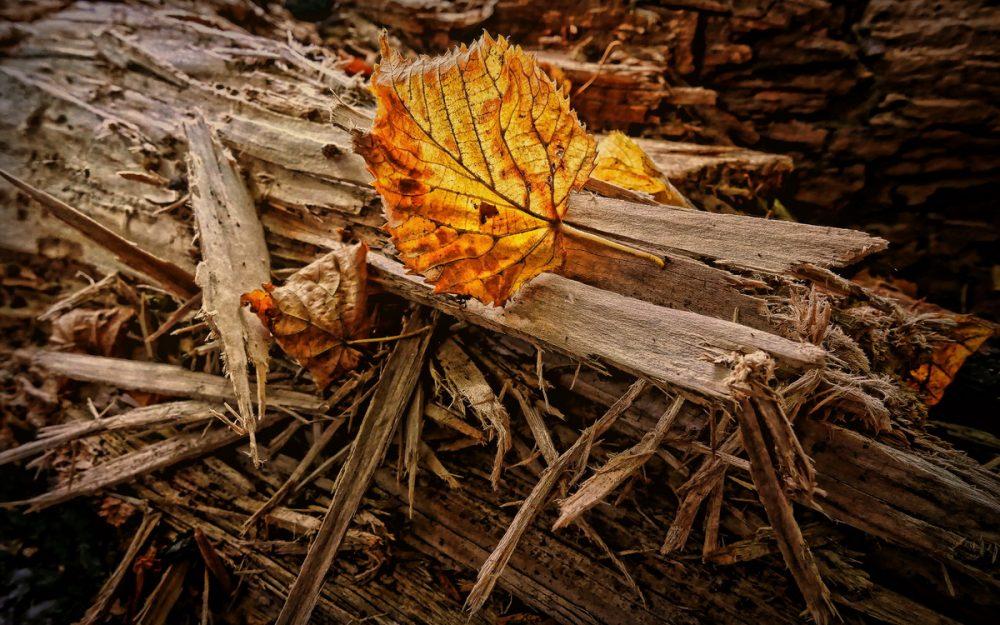 Autumn Leaf & Splintered Wood