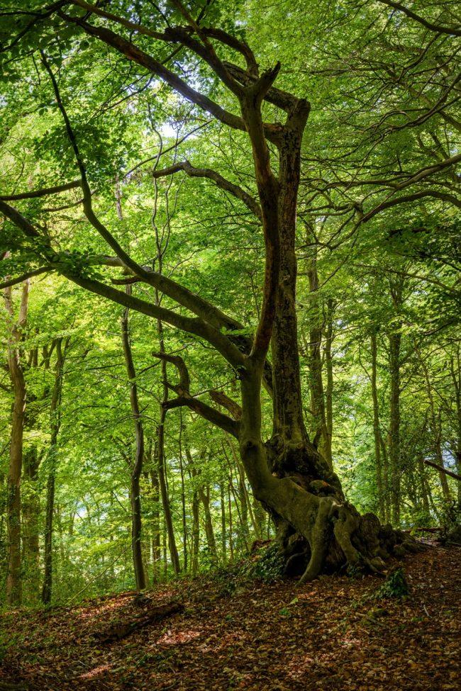 Buckholt Wood | Cranham | Gloucestershire